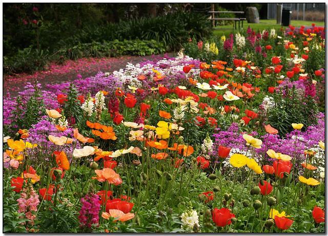 the flower gardens Sarah Macmillan Flickr