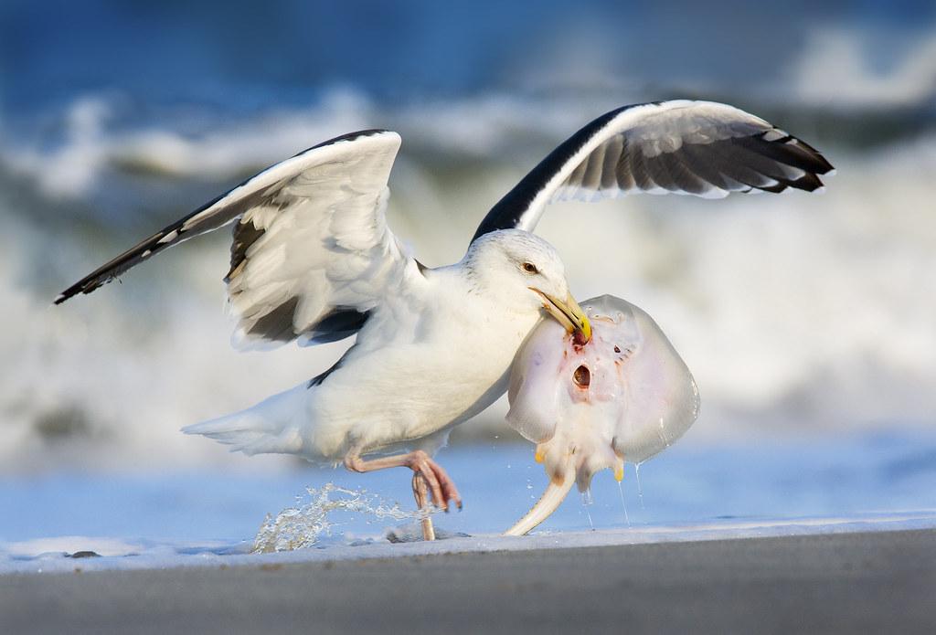 Фото чайки море