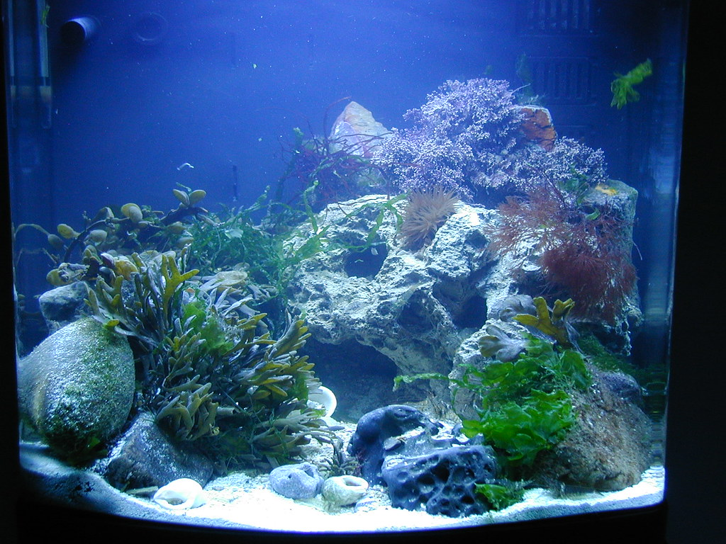 Image Result For The Aquarium