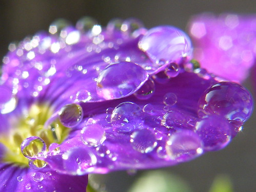 April shower 2 | by rdavo58