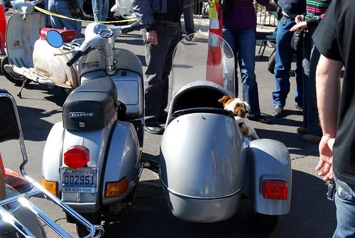 Dog Scooter For Sale Australia