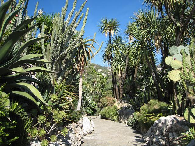 Jardin exotique de monaco marta flickr for Jardin exotique monaco