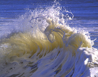 Wave Buzzard | by William  Dalton