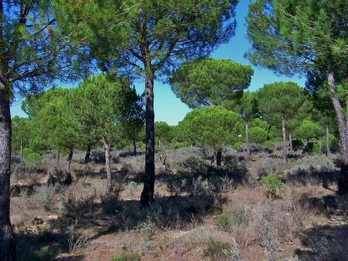 Coto Doñana national park, Sevilla, Spain - November 2007
