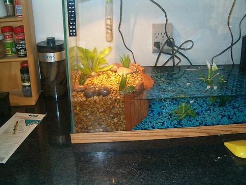 Turtle tank Flickr - Photo Sharing!