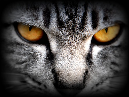 A cat's eyes are windows enabling us to see into another world. - Irish Legend | by Kelly Hyde