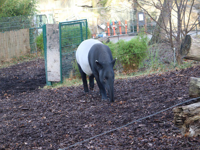 zoo copenhaga 6 obiective turistice copenhaga