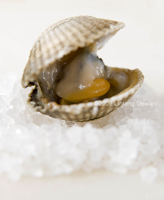 Open Clam On Salt | Linn Pauwels | Flickr Open Clam