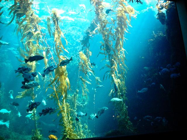 Birch Aquarium Flickr Photo Sharing