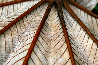 Leaf Lines | by zoom in tight