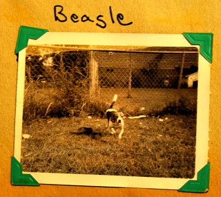 Beagle | by Valerie's Genealogy Photos