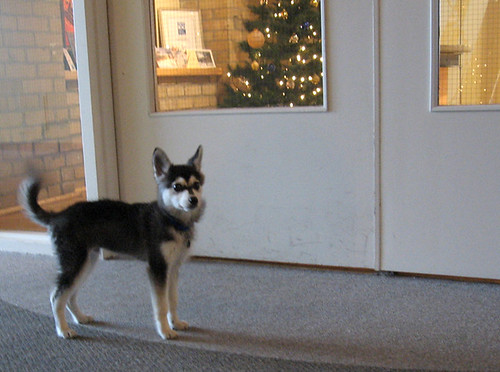 The cutest dog in the universe | Our neighbour office has ...