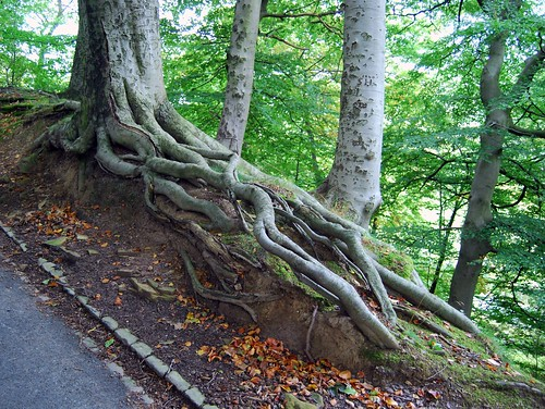 Tree Root | by Tim Green aka atoach