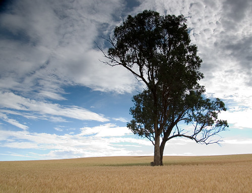 Tree and wheat | by jthommo101