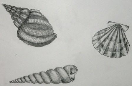 Pencil Sketching Sea Shells Kids Art Room Art Gallery