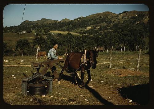 Small Farms In The Southwest Puerto Rico Loc Delano