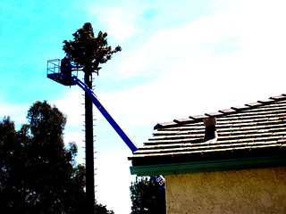 Disguised cell tower | by Bill Selak