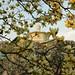 Administration Building through magnolia branches