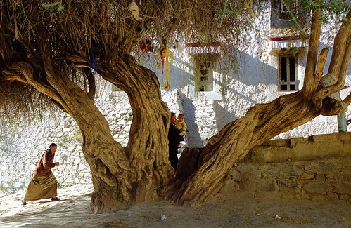 The Old Tree of Tashilhungpo Gompa | by reurinkjan