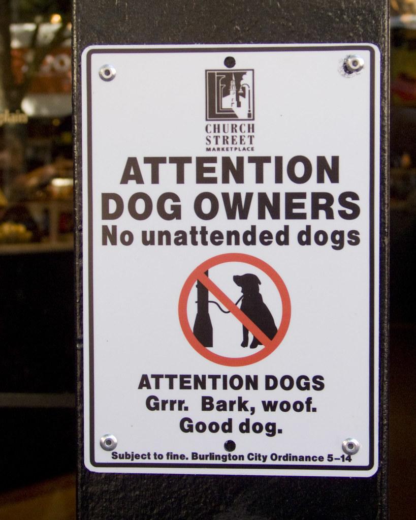 Dog Friendly Stores Burlington Vt