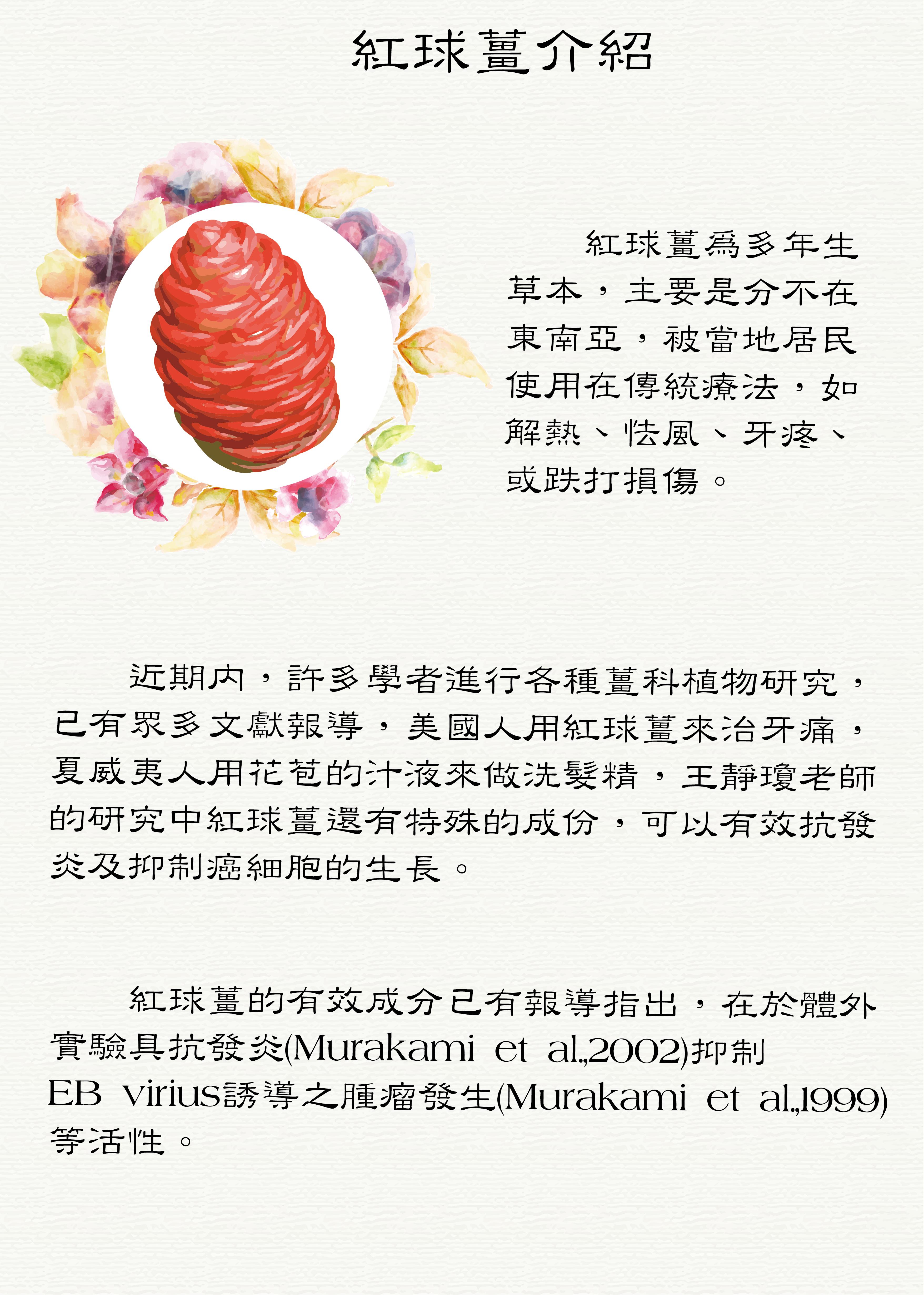 4.紅球薑介紹