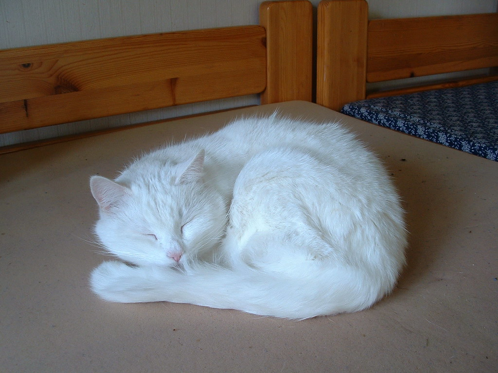 Cat Sleeping With Eye Open