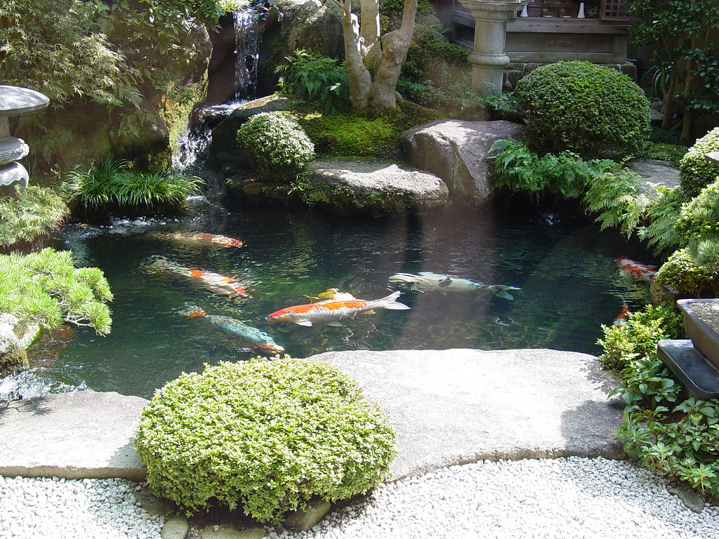 Koi pond in a sweet shop miajima island japan saimo for Koi pond supply of japan