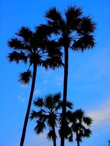 Jomtien Palm Beach Ctrip