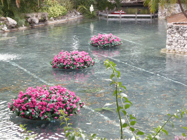 Floating flower pots flickr photo sharing for Floating plant pots