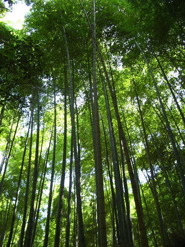 Bamboo grove | by One Man Walking