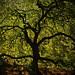 Tree Alive