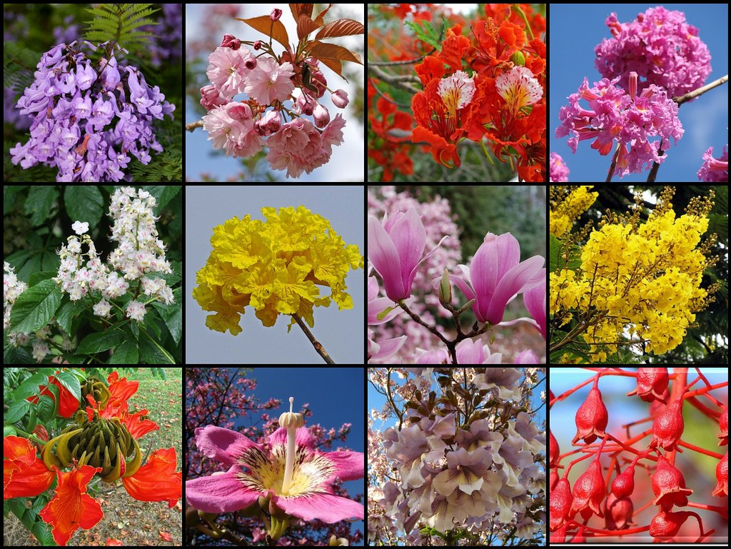 Most beautiful flowering trees (close-up) | The mosaic ...