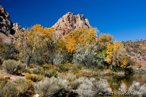 Mountain-with-fall-foliage-color-and-blue-sky-Spring-Mountain-Ranch-State-Park-Red-Rock-Canyon-Nevada-008.jpg | by RogueSocks
