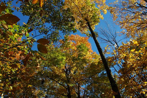 Fall Foliage 2007 | by WNPR - Connecticut Public Radio