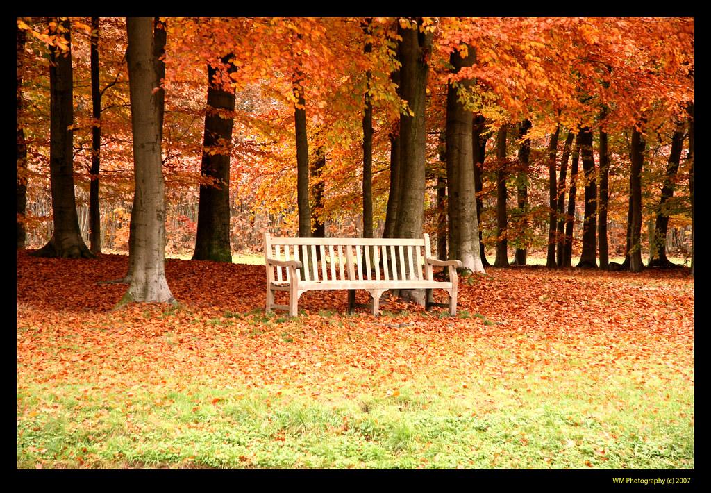Garden Bench In Autumn Scenery This Photo Is Taken At