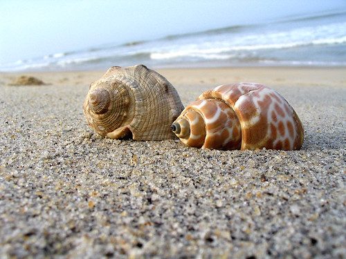 Shell Beach Guyana Tours