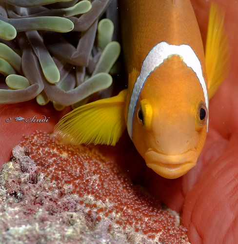 Facts About Clownfish  Live Science