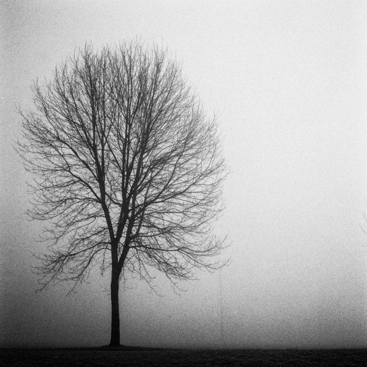 tree_2-745x745