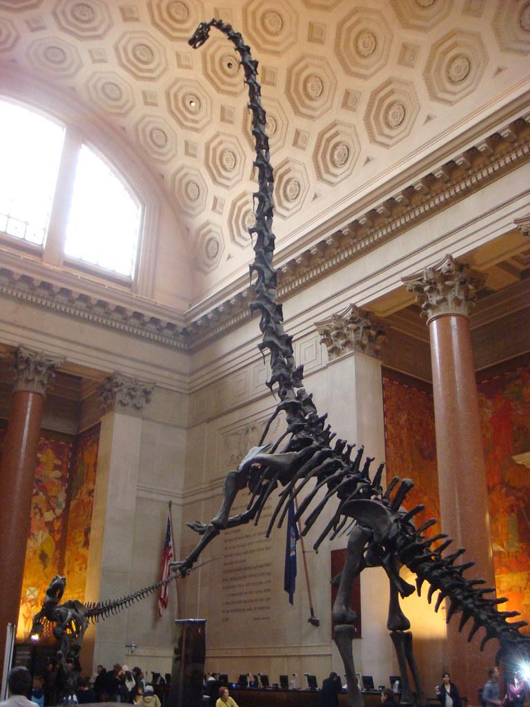 Jobs At The Natural History Museum Nyc