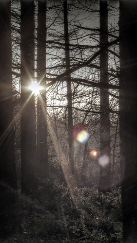 Woodland Sunshine