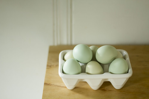 backyard chicken eggs | by childerhouse