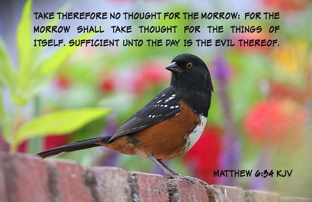 Matthew 6:34 - Bible verse of the day - DailyVerses.net