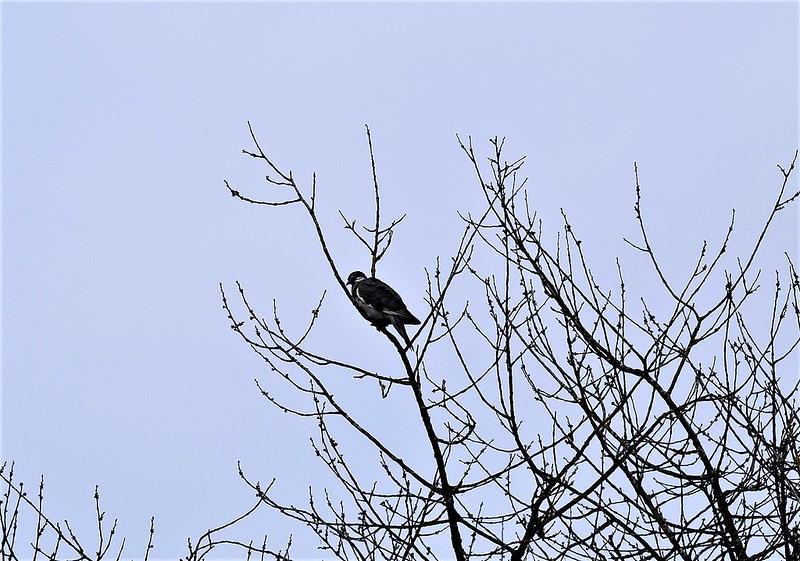 Unknown bird in tree 19.02 (1)