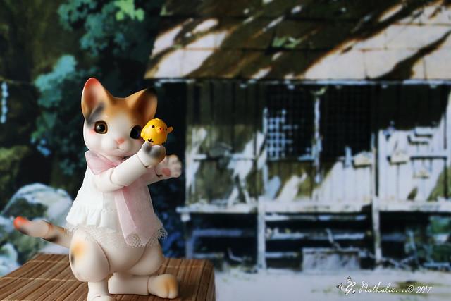 ✰ Ma famille de kitsune (p. 20) - Page 9 32639548352_70a1fe902e_z