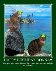 Happy Birthday to our contact: Donna♥ | by frog pond