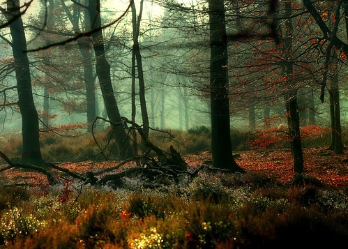 Fairy-tale Wood..... | by Astrid Photography.