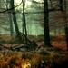 Fairy-tale Wood.....