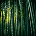 colors of bamboo* 02