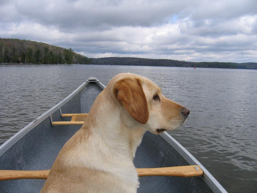Dog Cat Chicken Crossing River Conundrum