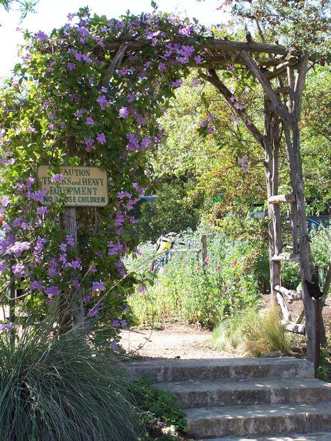 Natural Gardens, Austin TX | Gardener At Larrapin | Flickr